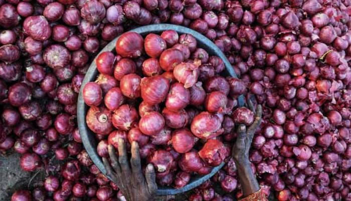 सड़ी हुई प्याज की फसलों ने निकाला किसानों की आंख से आंसू