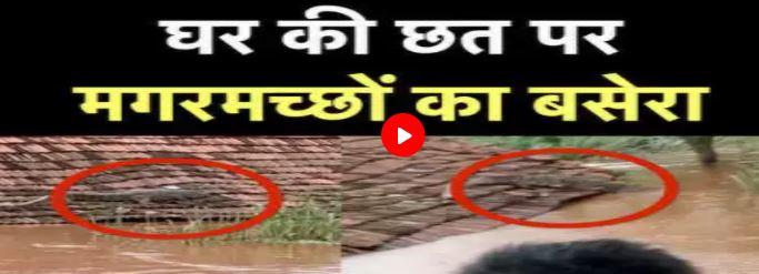 महाराष्ट्र में बाढ़ के बाद गांवों में दिखा मगरमच्छ का डेरा